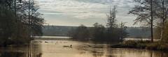 lac meziere (arnaud.abrial) Tags: france lac eureetloir campagne soleil hivers nikon zeiss 135mm milvus zeissmilvus135mm milvus2135