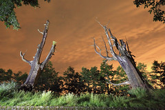 IMG_3720-3722_Overlay (Ethene Lin) Tags: 新中橫 塔塔加 夫妻樹 夜景