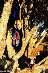 Belvdre de Ste Anne- dans l'arbre... (12) (richardcyrille) Tags: bretagne finistre goulet brest