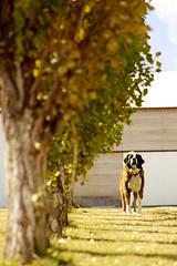 Perro Menonita II (Checker Morgendorffer) Tags: chihuahua mexico desert wild menonitas amish cuauhtemoc manzanas carretera crossroads flowers flores invierno winter north photography class