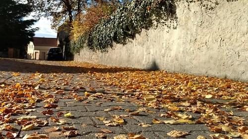 Herbst in Selzen an der Friedhofsmauer