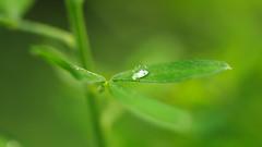 Lonely Droplet (jurgenkubel) Tags: droppe vattendroppe droplet waterdropp wassertropfen makro macro