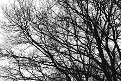 Maze in the sky (RolandHut) Tags: black white monochrone winter fall dark sky tree branches branch nikon d5100 nikond5100