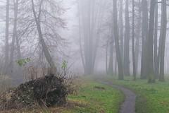 path in the fog... :) (green_lover) Tags: fog mist path trees autumn fall poland landscape seasons november