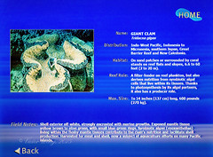 Giant clam information (Victor Wong (sfe-co2)) Tags: animal sea underwater reef tropical ocean nature marine saltwater aquatic water color aquarium colorful vacation tourism rock travel life macro creature colour bottom coral giant clam information display sheet card placard lcd screen panel tridacna gigas