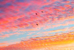 Sky is the Limit. (h862213) Tags: outdoor texture sky clouds birds fly sunrise sunset nature high light atmosphere 天空 彩霞 飞鸟 朝霞 自然 serene abstract