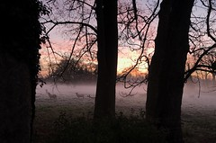 Skittish ... (Liane_M_S) Tags: morningmist lincolnshire spalding moulton iphoneography