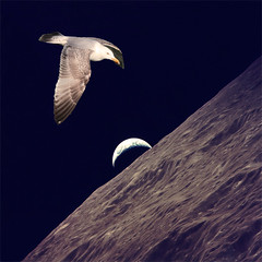 flying to the moon (YourCCDA) Tags: christophecloud moon earth nature dream space bird seagul apollo