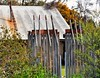 Impaled, HFF! (holly hop) Tags: slate stone historic architecture oneroom home house decay abandoned fence fencefriday garden gardenfence hff emu centralvictoria