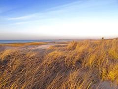 fullsizeoutput_def (ericssonbo24) Tags: winter dunes seagrass sand sky colors blue clouds horizon beach