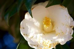 DSC08760 (@saka) Tags: autoupload leaves 599602 flowers 43324338 trees 52 street 4751