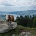 Auf der Aeschi-Allmi bei Aeschiried; im Hintergrund der Thuner See (2014-08-10 -17)