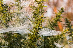20141012-Cobweb-0002.jpg (Pat_J1) Tags: cobweb glendalough greystonescameracluub