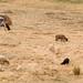 Campesinas e suas ovelhas