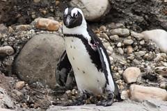 IMG_6841 (monsie315) Tags: nyc fish coneyisland aquarium aquaticlife nyaquarium