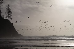 Oregon Coast: Short Sands Beach (eliduke) Tags: oregon shortsands shortsandsbeach