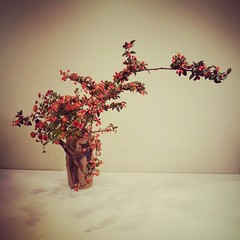 My berry ikebana today