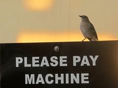 or else... (frankieleon) Tags: money bird sign interestingness interesting bestof lookout cc pay creativecommons popular payment owe watchfuleye guardbird frankieleon pleasepaymachine
