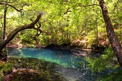 Hammock Sink (Marsh, D.) Tags: florida sinkholes leoncounty hammocksink leonsinksgeologicalarea floridianaquifer wetsink nikond5100 marshd