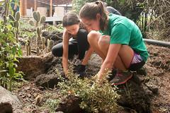 Galapagos-Gardening
