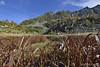 Torbiera- peat-bog (paolo.gislimberti) Tags: autumn autunno mountainlandscape cottongrass autumnalcolors ceresolereale coloriautunnali eriofori paesaggiodimontagna alpineenvironment alpinegrassland lagodres ambientiumidi prateriaalpina ambientealpino dampenvironments dreslake
