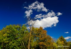 Fall Day in the Park - Explore (mswan777) Tags: park autumn trees sky color fall nature leaves clouds forest landscape nikon michigan scenic polarizer d5100 publishmyphoto