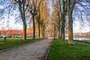 sur les bords de Saône (yannickbenassi) Tags: goldenart
