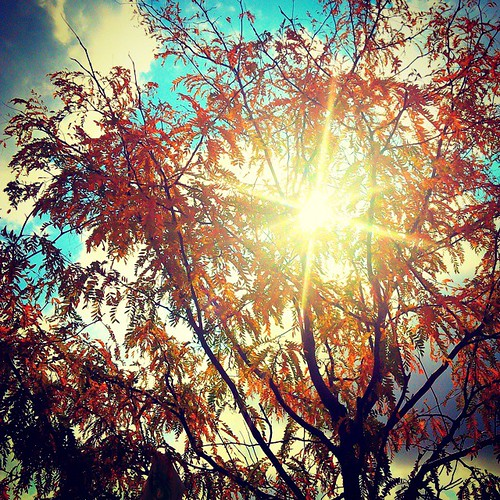 """Fall #phonephotography • <a style=""""font-size:0.8em;"""" href=""""http://www.flickr.com/photos/76866446@N07/15527019526/"""" target=""""_blank"""">View on Flickr</a>"""