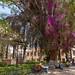 Praça florida e verde de Tarata