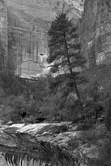 Zion, july 2014 (superzombie71) Tags: rollei 35 sonnar rpx
