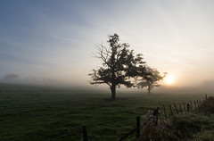 Trees in the morning (bernd obervossbeck) Tags: morning trees tree nature fog sunrise treesilhouette morninglight nebel natur bume morgen baum sauerland morgennebel morgenlicht morgenstimmung autumnmorning hochsauerland earlyfog baumsilhouette