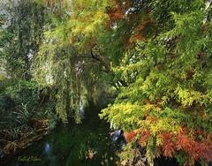 Fonti del Clitunno (Fabio Tiberi) Tags: verde mamiya 7 velvia paesaggio umbria 65 velvia50 clitunno fonti 65mm mamiya7 fabio61