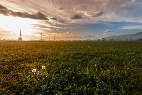 Field on a November morning