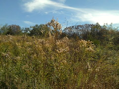 Tall Grass Prairie (atreasuretokeepcnr) Tags: oklahoma nature reserve conservation rsu ok hikingtrail claremore tallgrassprairie claremoreok rogersstateuniversity weathertrail natureeducationreserve conservationeducationreserve