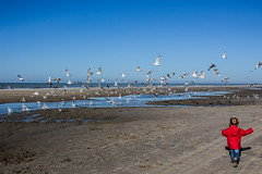 L'envol (Johann H) Tags: mer beach plage mouette envol quend