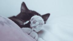 Godzillito! (a(pez)tada) Tags: cat godzilla gato