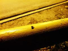 13579 (original.intent) Tags: road light water rain yellow drops highway little side snail rail surface athens un tension sludge escargot humid petit