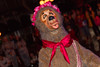 Mickey's Costume Party Cavalcade (heytherejere) Tags: disneyland disney disneycharacters countrybearjamboree disneycastmembers disneyparks liverlips mickeyshalloweenparty mickeyscostumepartycavalcade
