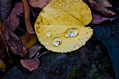 It Happen's. (Omygodtom) Tags: park detail macro texture nature leaves oregon composition season yahoo google nikon flickr dof bokeh explorer perspective existinglight pdx tamron raindrop facebook tamron90mm d7000