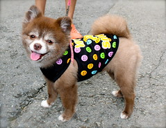 park dog cute smile japan puppy happy nationalpark walk national osaka cutedog happydog dogclothes minoh minoo dogsmiling dogshirt