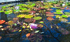 newyorkcity color fall centralpark lilypond conservatorygarden