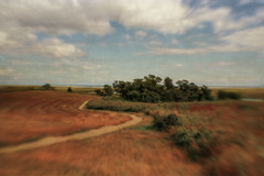 Take a Hike (SLEEC Photos/Suzanne) Tags: lensbaby landscape capecod massachusetts ss trail textured forthill flypaper