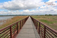 Views from Secaucus Greenway (Boardwalk, 1 of 4) at Mill Creek Point, Secaucus NJ & the Meadowlands (takegoro) Tags: blue sky nature clouds landscape meadowlands wetlands boardwalk marsh secaucus new jersey wildlilfe river hackensack millcreekpoint secaucusgreenway