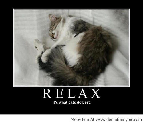 15756478036_8a36baa503 damn funny pics,images,funny memes,lol photos i'm always relaxing