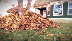 Three Feet High and Rising (Kenneth Wesley Earley) Tags: autumn fall leaves spokane seasonal stack rake pile northcentral frontyard spokanewa coldsnap 99205 spokanistan emersongarfield htconem8 spokandyland