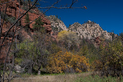 More fall color (Gallopingphotog) Tags: westforkoakcreektrail rt89a oakcreekcanyonscenicdrive indianwellstrip2014