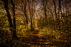 Where The Lost Souls Hide..... (Donna St.Pierre) Tags: travel autumn light sunlight color fall tourism nature weather landscape photography landscapes cool woods photographer shadows path newengland sunny providence crisp rhodeisland chilly pvd cranston goprovidence autumn2014