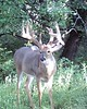 Kansas Trophy Whitetail Bow Hunt 39