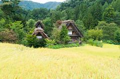 Surrounded (Wunkai) Tags: nogun gifuken japan shirakawa  paddy    ogimachi  thatchedroof