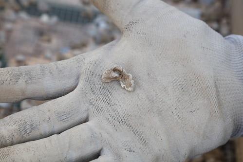 Exhumación cementerio civil Ponferrada (12)
